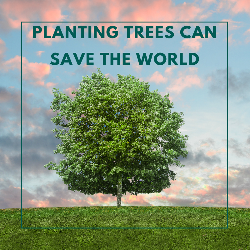 "Image of tree with text saying ""Planting Trees Can Save The World"""
